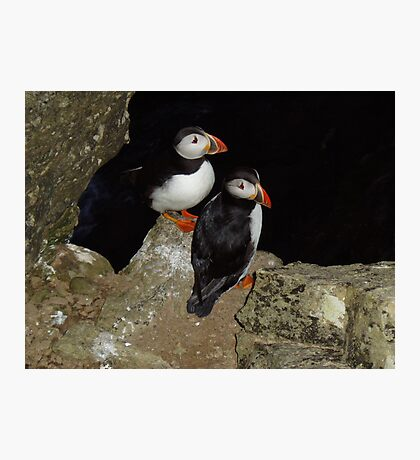 Puffins at night Photographic Print