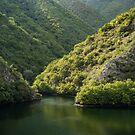 Green Sylvan Mountains, Tumbling into a Silky Forest Lake by Georgia Mizuleva