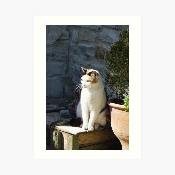 Cyprus cat Art Print