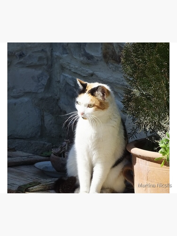 Cyprus cat by martina