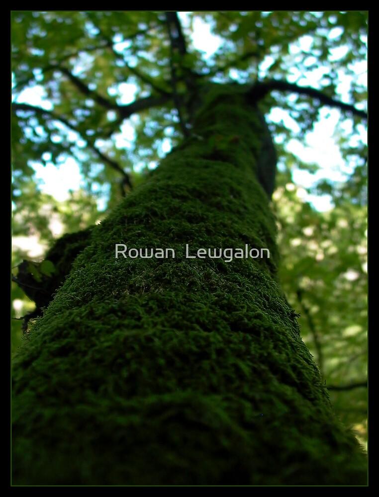 Mossy Tree by Rowan  Lewgalon