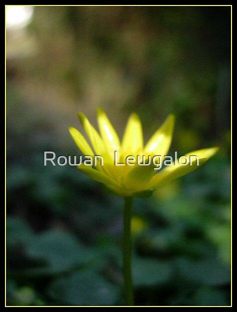 Bright shining star by Rowan  Lewgalon