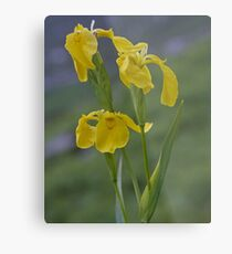 Yellow Flag Iris - Donegal Metal Print