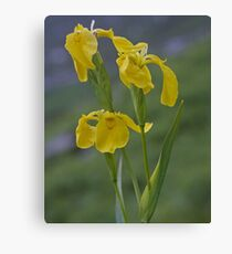 Yellow Flag Iris - Donegal Canvas Print
