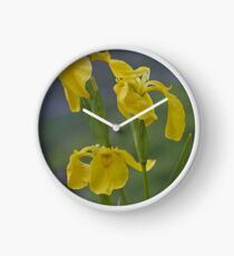 Yellow Flag Iris - Donegal Clock