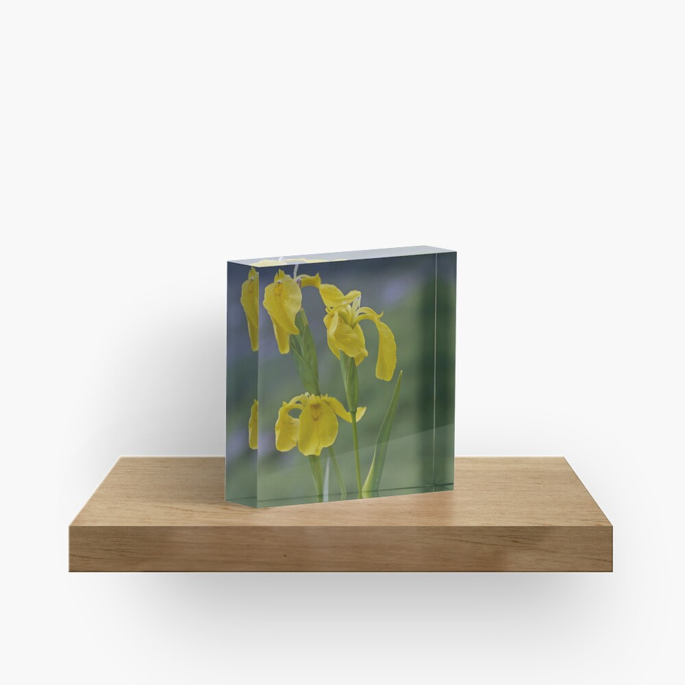 Yellow Flag Iris - Donegal Acrylic Block