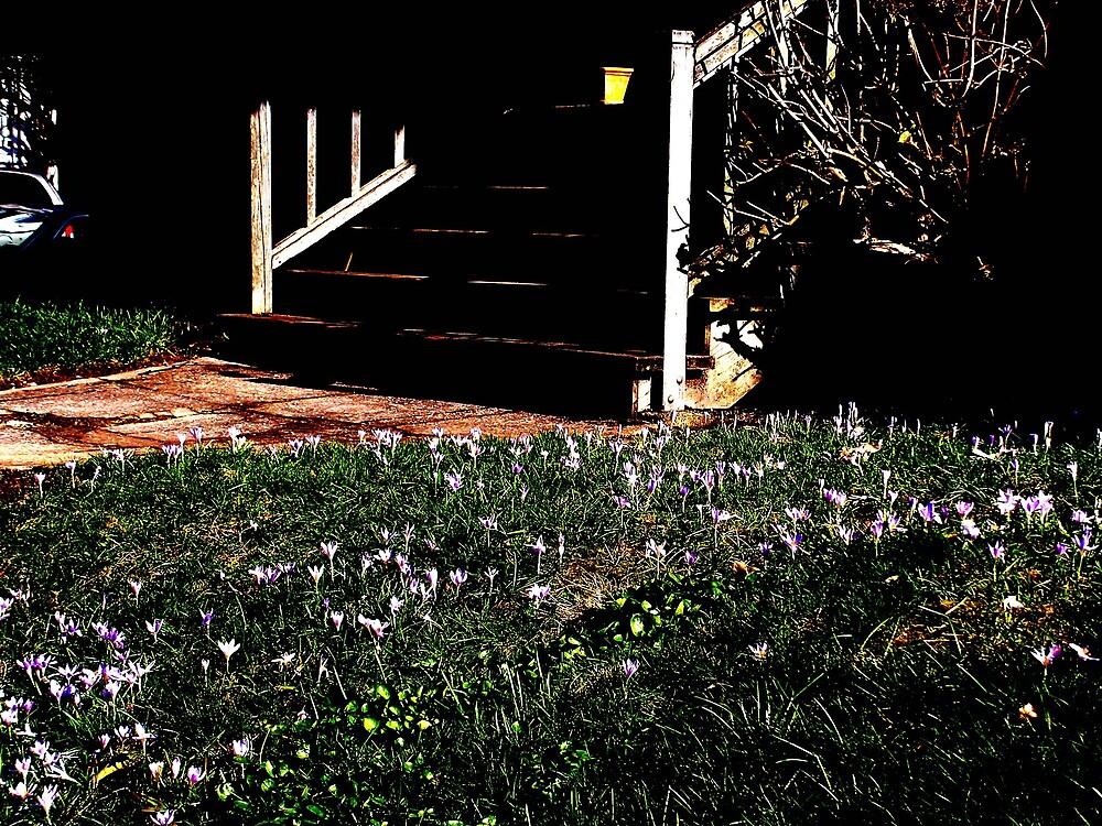 Crocus invasion -- Portland, Oregon by margaretarts