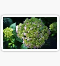 Lime-Green Hydrangea Sticker