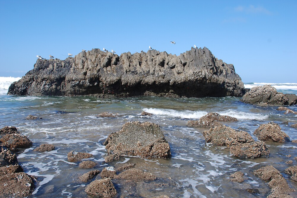 Rocks & Birds Oregon Beach by Deby Moehnke