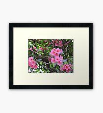 Amazing Azalea Framed Print