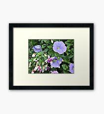 Lilac Trombones Framed Print