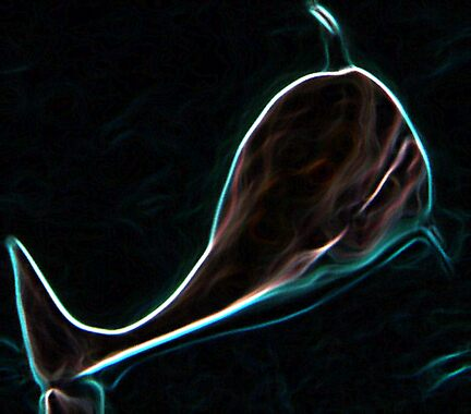 Midnight Glow Dolphin by blackcloud