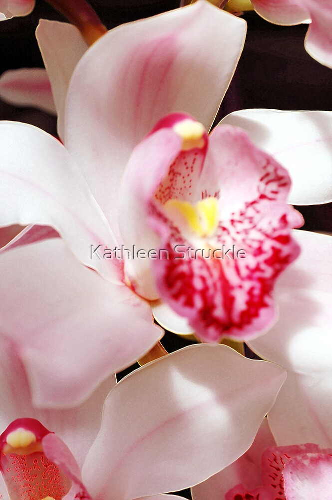 One Lacy Orchid by Kathleen Struckle