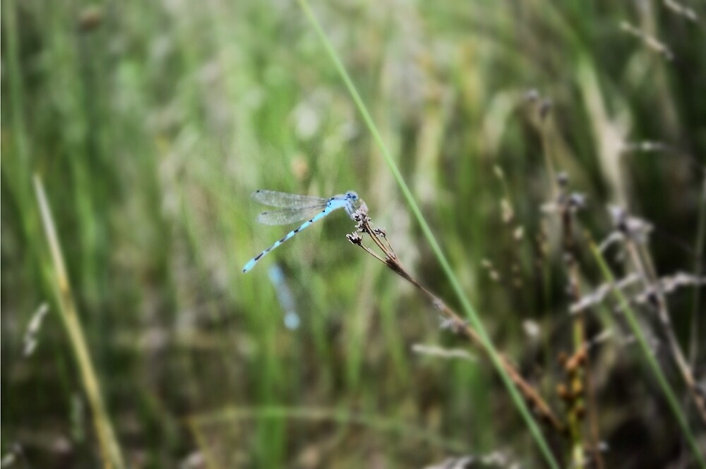 Dragonfly by Maddy Pothier
