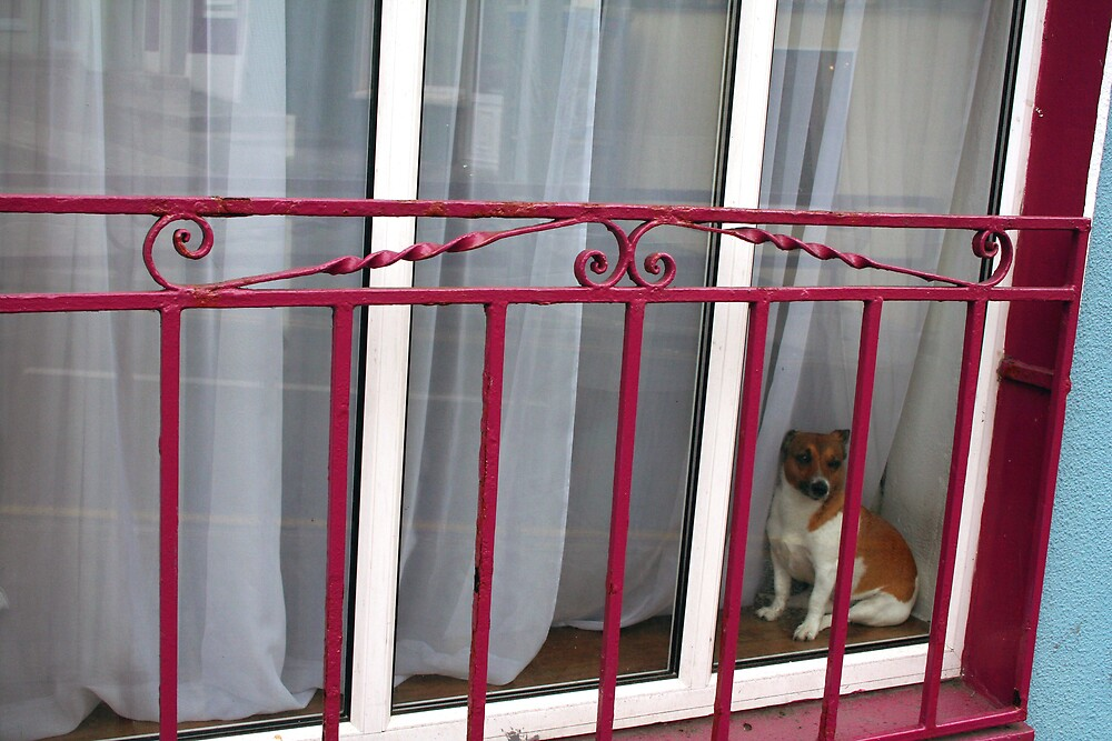 Doggy In The Window by Larry149