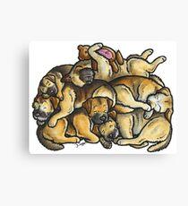 Sleeping pile of Border Terriers Canvas Print