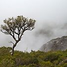 Tree on Bluff Knoll by Werner Padarin