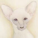Serious faced Kitten. by Siamesecat