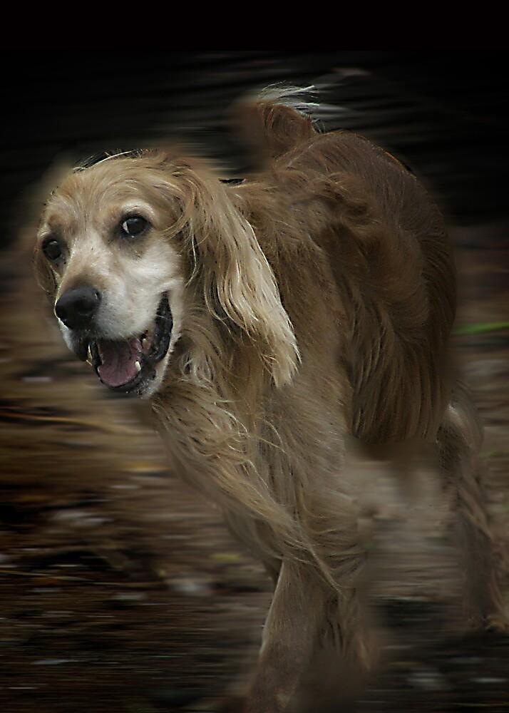 Old Dog. by Boris Vinokur