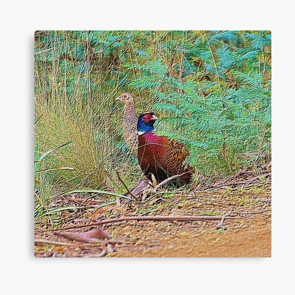 EXOTIC ~ Common Pheasant by David Irwin / tasmanianartist Canvas Print