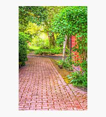 Paved garden path with shrubs Photographic Print