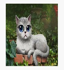 Cutest Cat Graphic Photographic Print