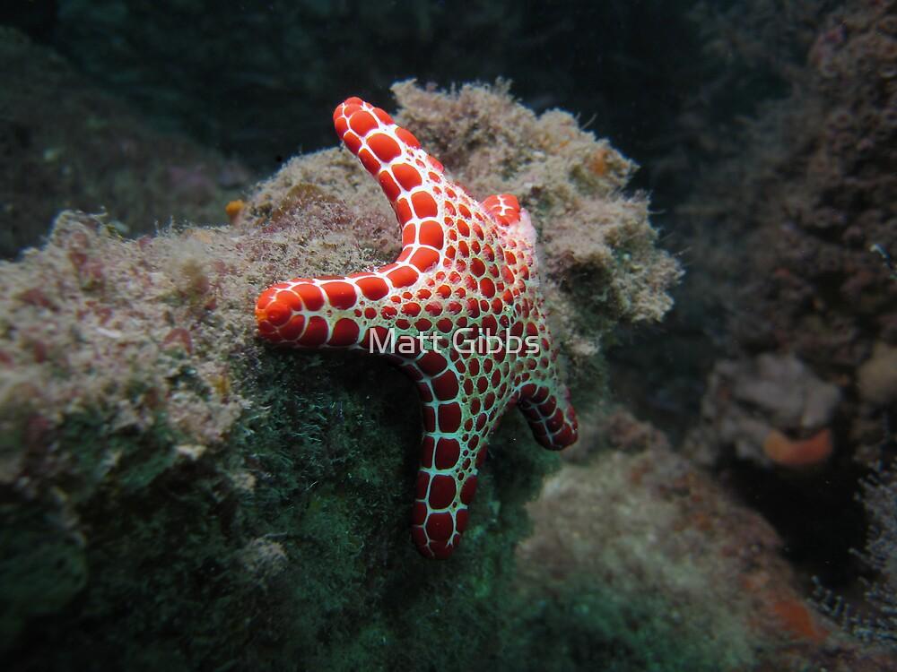 Red Plated Seastar by Matt Gibbs
