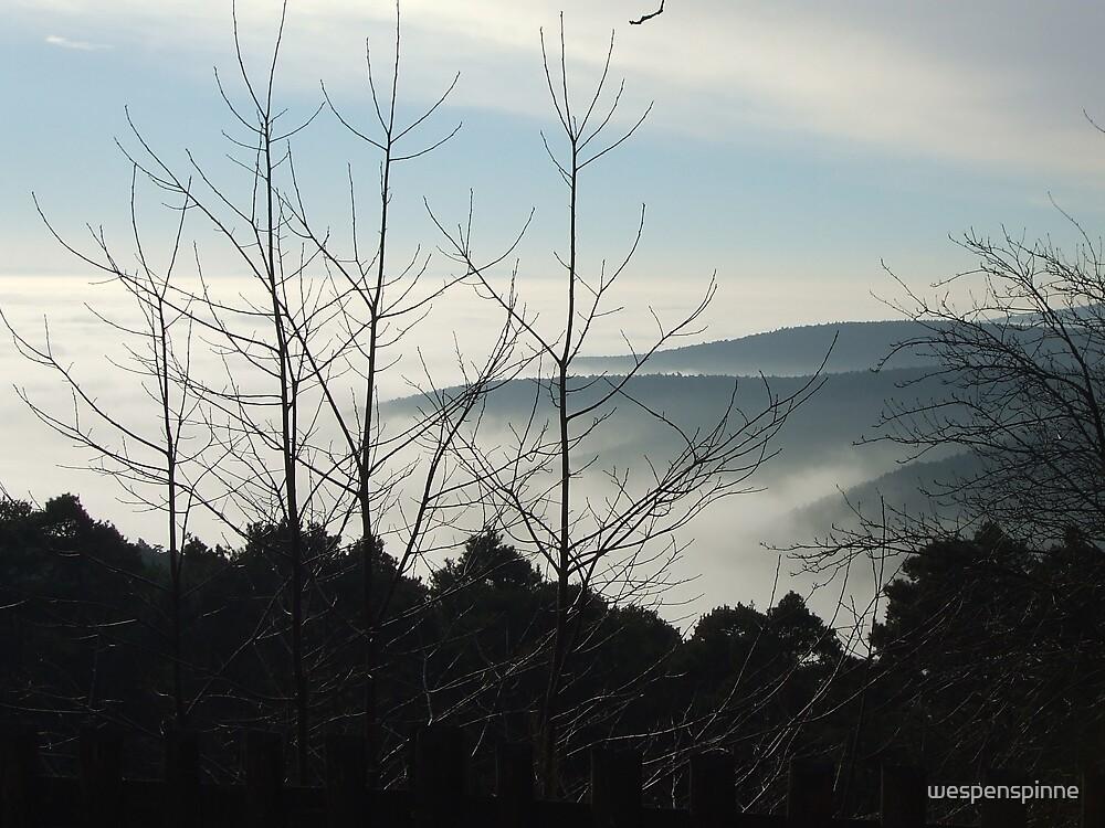 above the fog 2 by wespenspinne