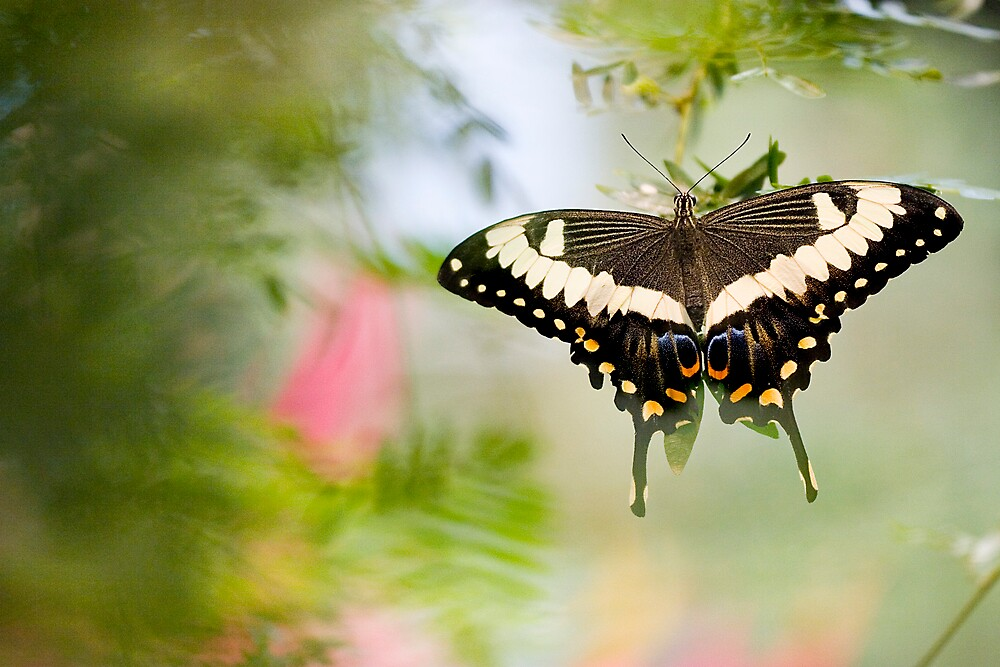 Butterfly In Flight by Chet Scerra
