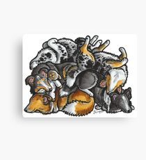 Sleeping pile of Shetland Sheepdogs Canvas Print
