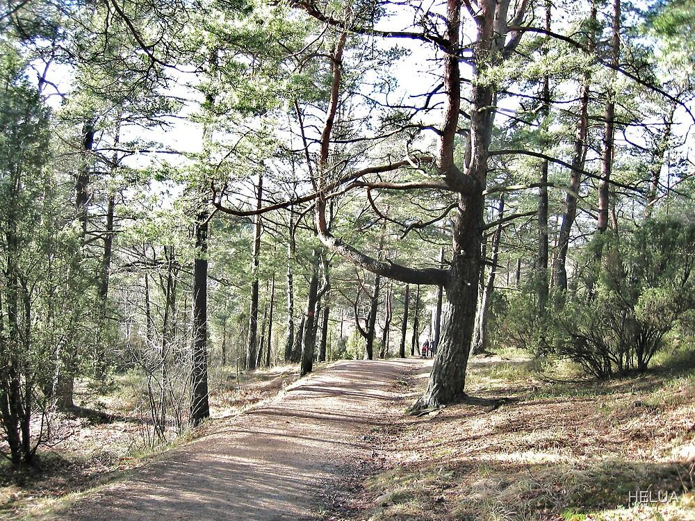 Trees Along the Path by HELUA