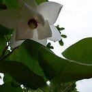 Under the Magnolia by Betty Mackey
