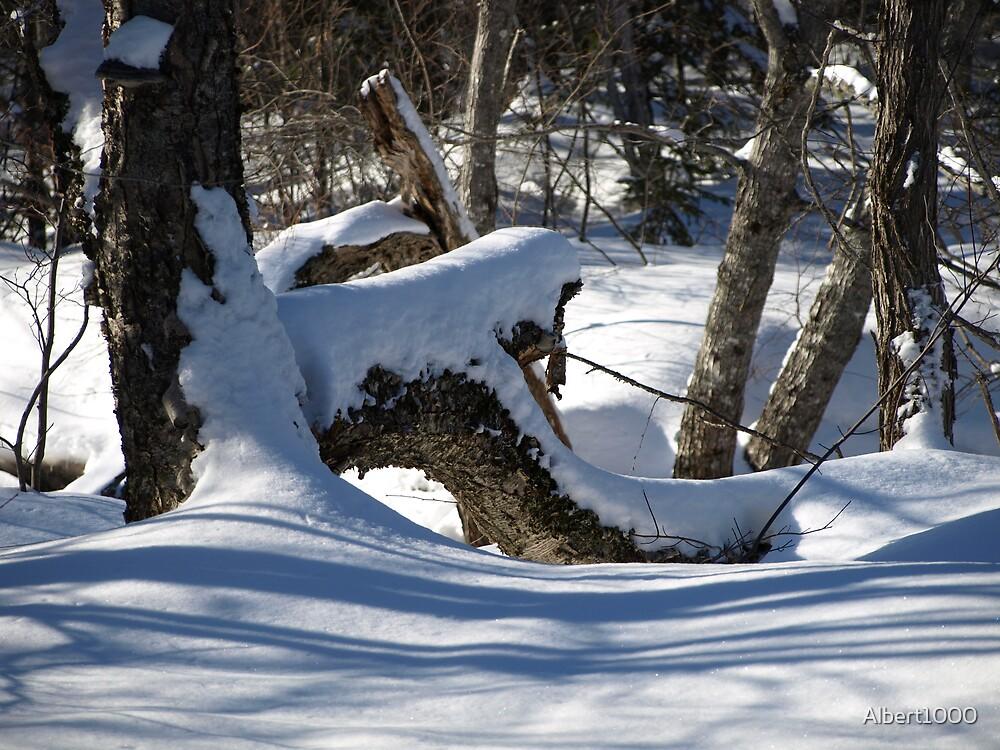 NC shadows of winter. by Albert1000