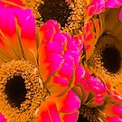 Gerber Daisies with a Twist by Jacqueline Cooper