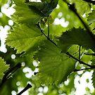 Green Summer Rain with Grape Leaves - Vertical by Georgia Mizuleva