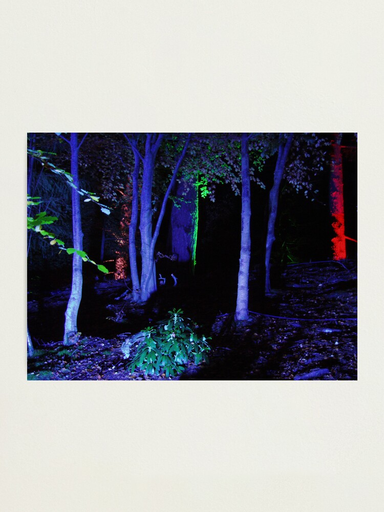 Alternate view of The Enchanted Forest Photographic Print