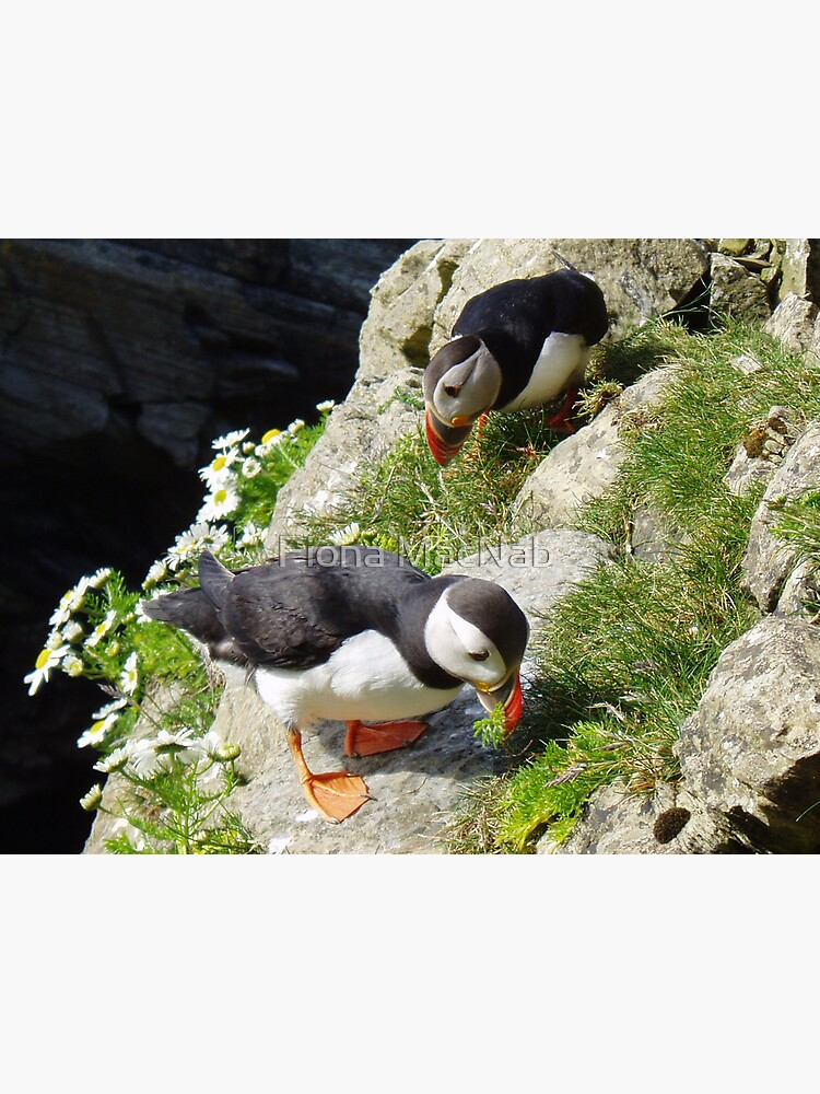 Housework - Puffin Style by orcadia