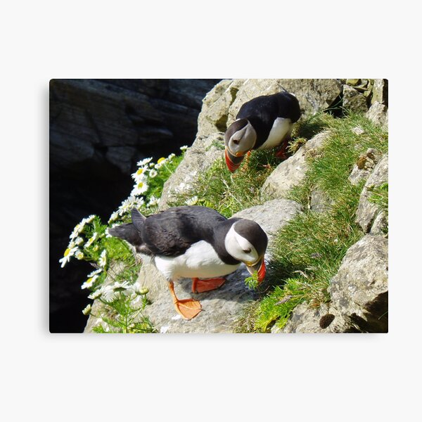 Housework - Puffin Style Canvas Print