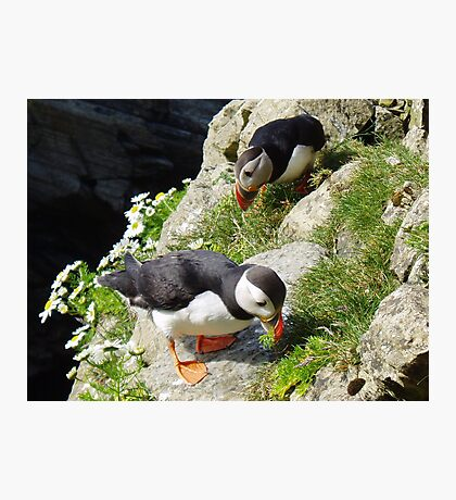 Housework - Puffin Style Photographic Print