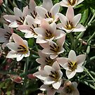 A Bouquet of Miniature Tulips Celebrating the Spring Season - Vertical by Georgia Mizuleva