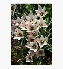 A Bouquet of Miniature Tulips Celebrating the Spring Season - Vertical Photographic Print
