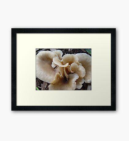 Unidentified Fungi Framed Print