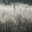 Fog Enshrouded Forest by Lisa Knechtel