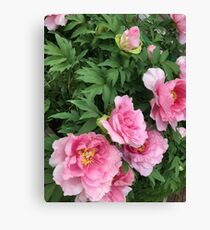 Aesthetic Pink flowers Canvas Print