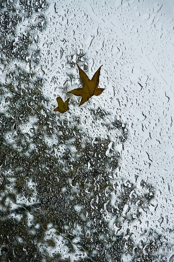 The Beauty of Autumn Rains - a Vertical View by Georgia Mizuleva