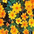 Orange Flowers  by Ethna Gillespie
