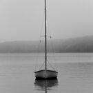 In the Mist by Debra Fedchin