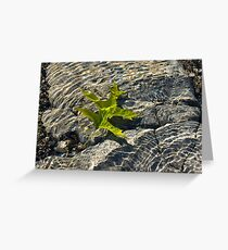 Submerged Beauty - Sunny Rainbows and a Jade Green Oak Leaf Greeting Card