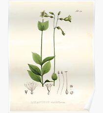 Nova genera et species plantarum V1 V3 Plates Karl Friedrich Philipp von Martius 1834 176 Poster