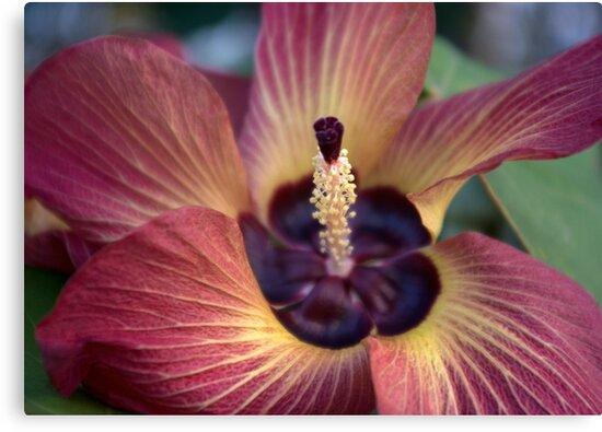 One Last Fling ('Hibiscus Tiliaceus' Bloom) by Kerryn Madsen-Pietsch